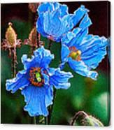 Himalayan Blue Poppy Flower Canvas Print
