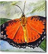 Himalayan Red Lacewing Canvas Print
