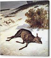 Hind Forced Down In The Snow Canvas Print