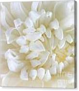 Hint Of Color Canvas Print