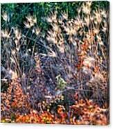 Hint Of Fall Colors 15813 Canvas Print