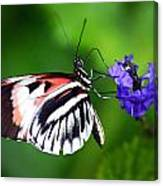 Hint Of Red Butterfly Canvas Print