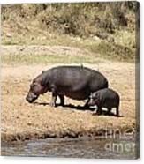 Hippo Mum And Calf Canvas Print