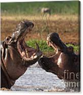 Hippo Threat Display Canvas Print
