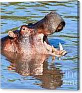 Hippo With Open Mouth In River. Serengeti. Tanzania Canvas Print