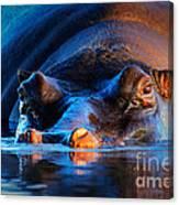 Hippopotamus  At Sunset Canvas Print