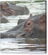 Hippopotamus In Kenya Canvas Print