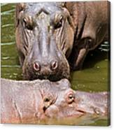 Hippopotamus In Water Canvas Print