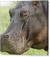 Hippopotamus Okavango Delta Botswana Canvas Print