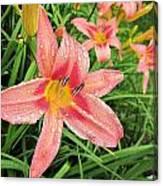 Hiroko Pink Daylily Canvas Print