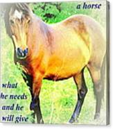 Care About A Horse And He Will Give You His Heart In Return  Canvas Print