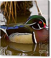 His Majesty Wood Duck Canvas Print