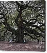 Historic Angel Oak Canvas Print