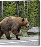 Hmmm .... What's On The Other Side Of The Road Today? Canvas Print