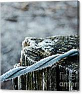 Hoar Frost At Sun Up Canvas Print