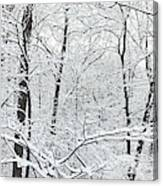 Hoar Frost Covered Trees In Forest Canvas Print