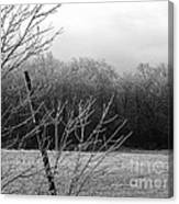 Hoar Frost On The Wood Canvas Print