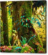 Hoh Grove Canvas Print