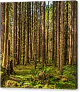 Hoh Rain Forest Canvas Print