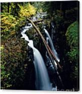 90122 Hoh Rainforest Canvas Print