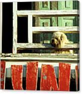 Hoi An Dog 02 Canvas Print