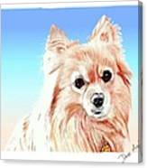 Hoku - A Former Shelter Sweetie Canvas Print