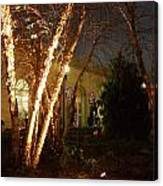 Holiday Birches Canvas Print