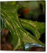 Holly Leaf Abstract Canvas Print