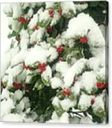 Holly Tree With Snow Canvas Print