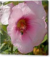 Hollyhock And Bee Canvas Print