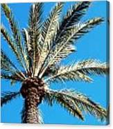 Hollywood Palm Canvas Print