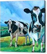 Holstein Amoogos Canvas Print