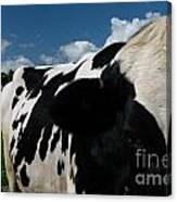Holstein Cow And Pasture Canvas Print