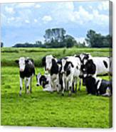 Holstein Heaven Canvas Print