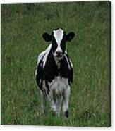 Holstein Hello Canvas Print
