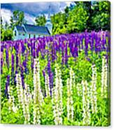Holy Lupines Canvas Print