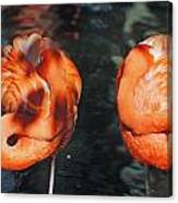 Homosassa Springs Flamingos 14 Canvas Print