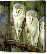 Homosassa Springs Snowy Owls 2 Canvas Print