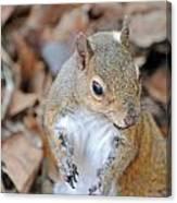 Homosassa Springs Squirrel 2 Canvas Print