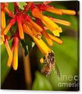Honey Bee 7 Canvas Print