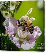 Honey Bee And Blackberry Canvas Print