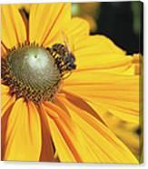 Honey Bee And Yellow Dahlia Flower Canvas Print