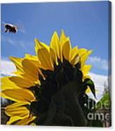 Honey Bee In Flight. Canvas Print