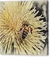 Honey Bee Meets Dandy Lion Canvas Print