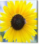 Honey Bee On Wildflower Canvas Print