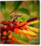 Honey Bee Profile Canvas Print