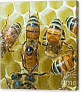 Honey Bees In Hive Canvas Print