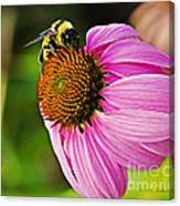 Honeybee On Echinacea Flower Canvas Print