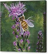 Honeybee On Liatis Canvas Print