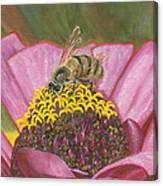 Honeybee On Pink Zinnia Canvas Print